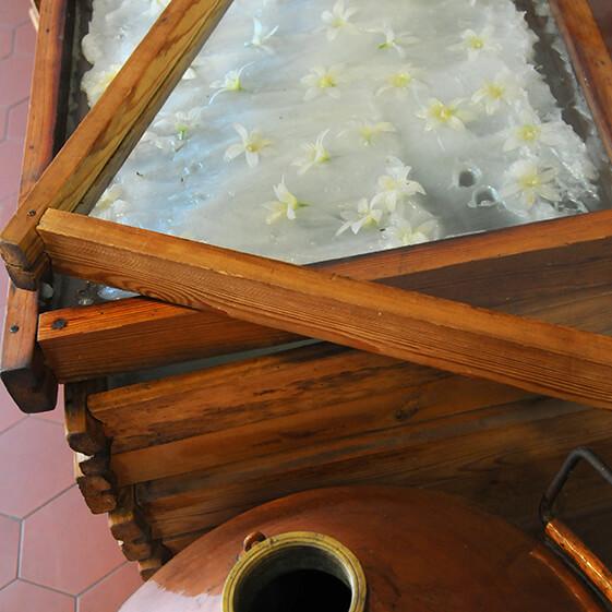 enfleurage - Galimard parfumeur à Grasse