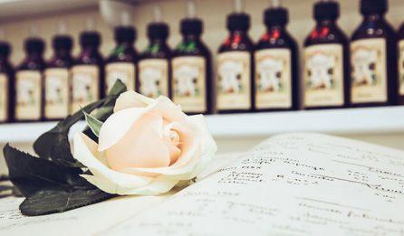 Rose blanche sur composition d'un parfum - Galimard parfumeur à Grasse