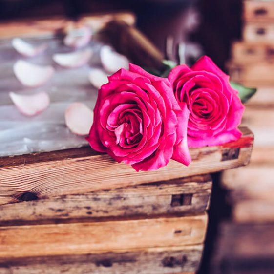 Rose rouge posée sur un cadre d'enfleurage parsemé de pétales de rose - Galimard parfumeur à Grasse